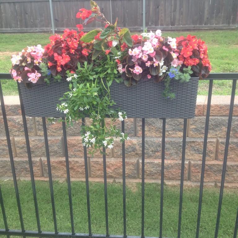 цветы на террасе