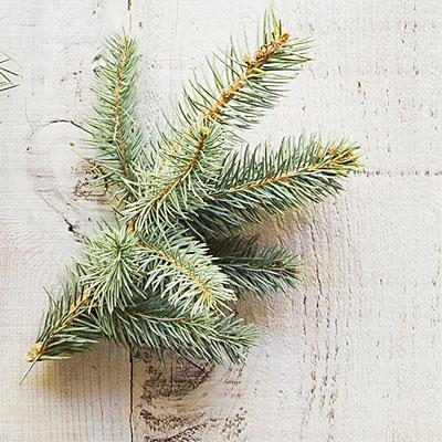 купить новогоднюю живую елку