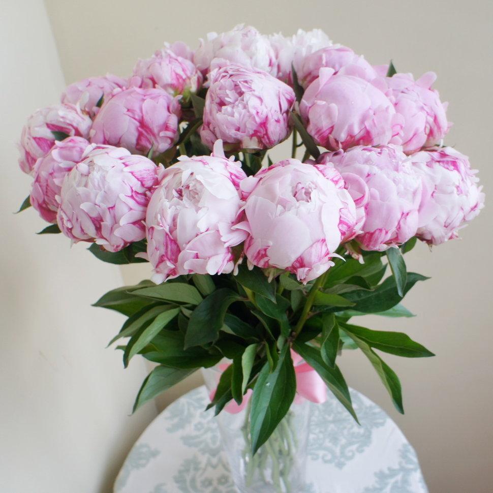 Цветы в горшках название и 83