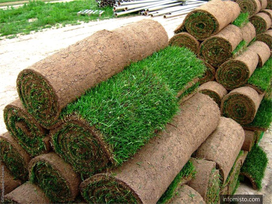 газонная трава доставка