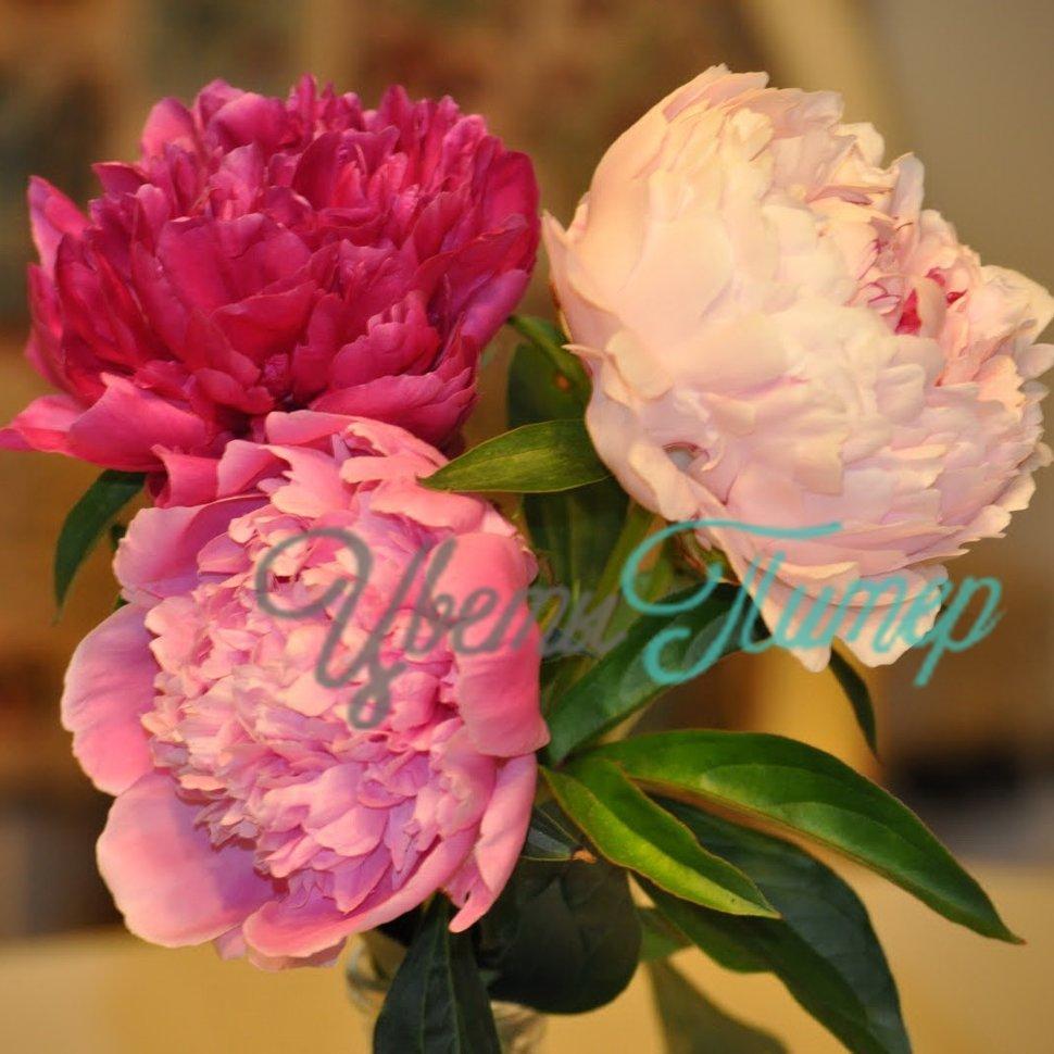 Интернет магазин цветов питера